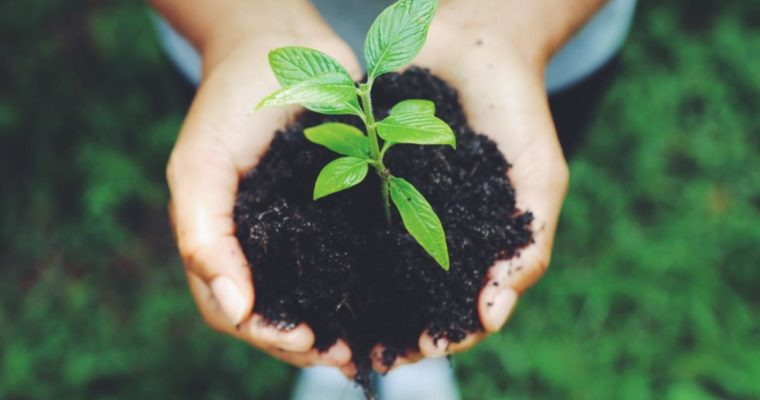 The Secret Life of Soil and Its Impact on Our Health